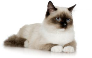 Кастрация кошек и котов