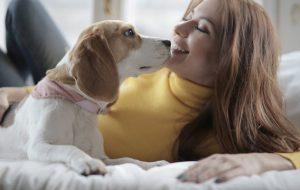 Ученые натренируют собак на выявление коронавируса