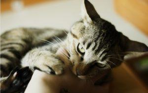 8 советов, как отучить котенка кусаться и царапаться