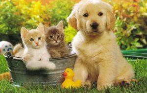 Фото милых животных улучшают внимание и сосредоточенность