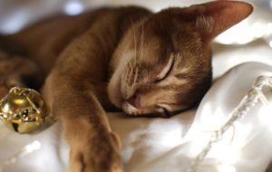 От чего зависит, сколько спят кошки