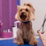 Новые породы собак, о которых вы могли не знать