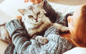 Почти как люди: самые умные породы кошек