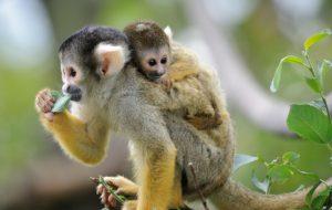 Как родители заботятся о детях в дикой природе?