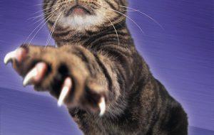 Как подстричь когти котенку? Основные советы