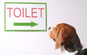 Как выбрать ветеринара для вашего питомца
