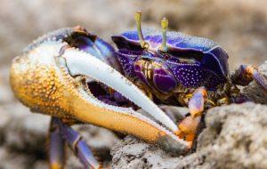 Как устроена жизнь на морских берегах?