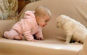 Знакомство ребёнка с домашними питомцами