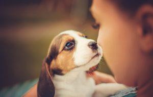 До слез: преданность этих собак растопит любое сердце