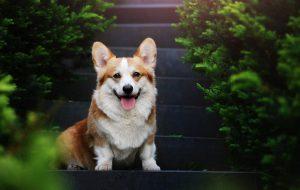 Ученые утверждают: владельцы собак живут дольше