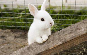 Клички для кроликов мальчиков
