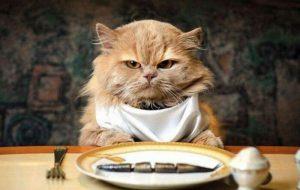 Отравление у кошек: причины и симптомы