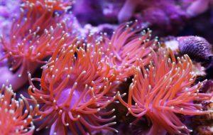 С кем дружат морские анемоны?