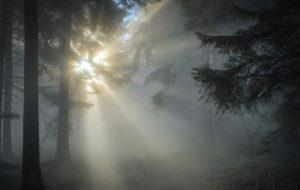 Кто обитает в верхнем ярусе леса?