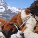 Без клиники и лицензии: чем опасен вызов ветеринара на дом?