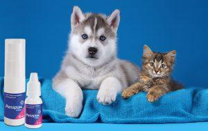 Несколько интересных фактов о домашних животных