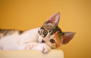 Как обустроить квартиру, в которой живет кошка