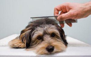 Составляем полезный рацион для собак