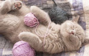 Как разнообразить кошачий досуг?