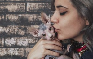 12 ошибок, которые укорачивают жизнь нашим питомцам
