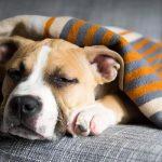 Ругать бесполезно: как отучить собаку грызть мебель