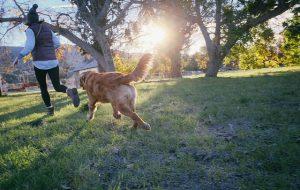 Домашние животные улучшают здоровье