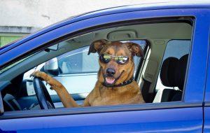 Путешествие с собакой на машине: основные аспекты