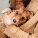 Лишний вес и ожирение у собак и кошек