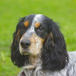 Особенности кормления и ухода за собаками осенью