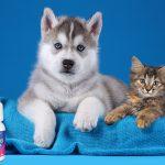 Кератит у собак – современные возможности лечения