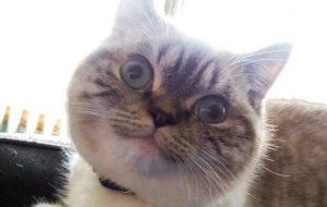 Опасна ли валерьянка для кота?