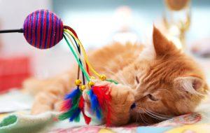 Как сделать игрушку для котенка?