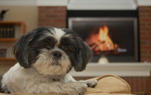 Как согреть домашнего питомца в холода без отопления?