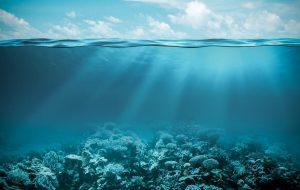 Кто обитает на дне океана? Необычные живые существа морского дна