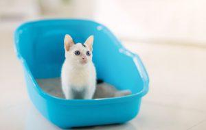 Почему кошка игнорирует свой лоток и как избавиться от запаха кошачьей мочи в доме?
