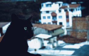Магия кошки. Белый и черный питомец