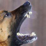 Кинолог рассказал, как защититься от диких собак
