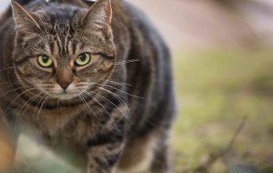 Ожирение животных: почему возникает и как бороться