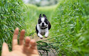 Как научить собаку команде «Ко мне!»