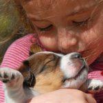 Токсоплазмоз у беременных: когда важно ограничить контакты с котиком?