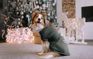 Как мы все будем встречать Новый год 2021: показывают собачки