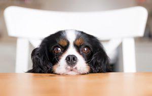 Как выбрать собаку для пожилого человека: полезные советы и лучшие породы