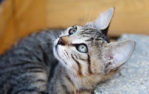 Гигиена кошек зависит от своевременной стрижки