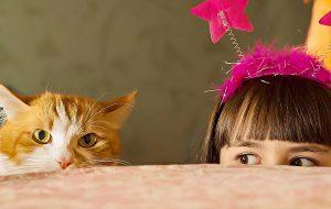 Как подружить кошку и комнатные растения
