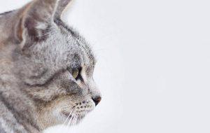 Характеры кошек