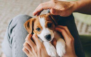 Чего боится ваша собака и как вы можете ей помочь