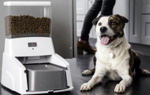 Автокормушка для собак – что это такое, принцип работы, существующие варианты