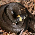 Какие змеи водятся в России?