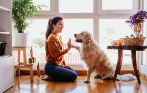 Говорите чаще: ученые выяснили, какие слова обожают собаки