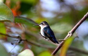 Зимние грёзы о колибри